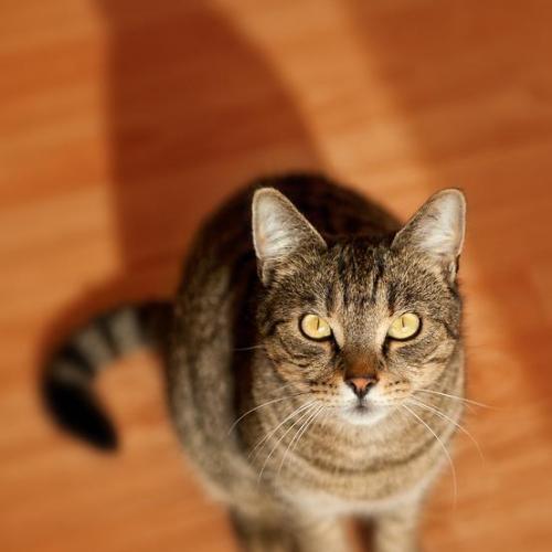 photo_pets